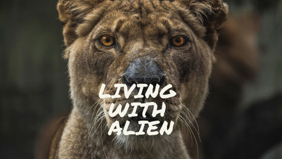 Living-with-alien