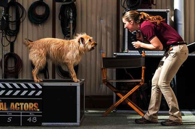 Animal-trainer