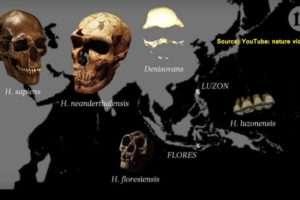 Homo-luzonensis