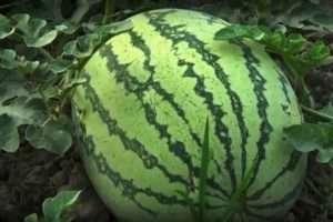 watermelon-benefits-in-summer