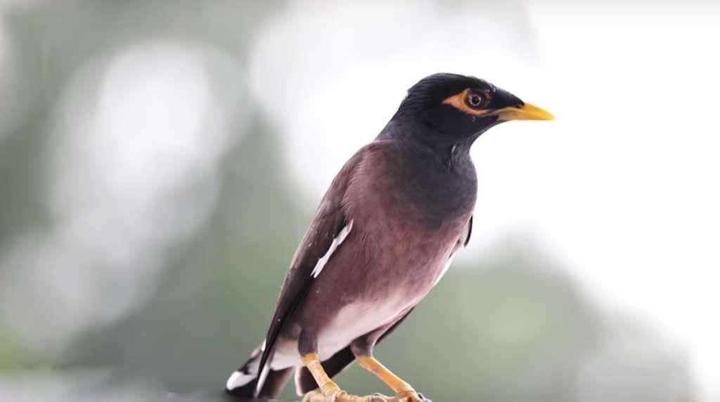 Sundarban-bird