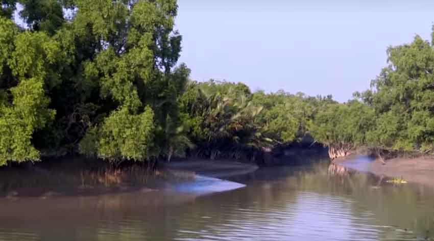 Sundarban river