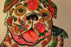 A Bulldog life