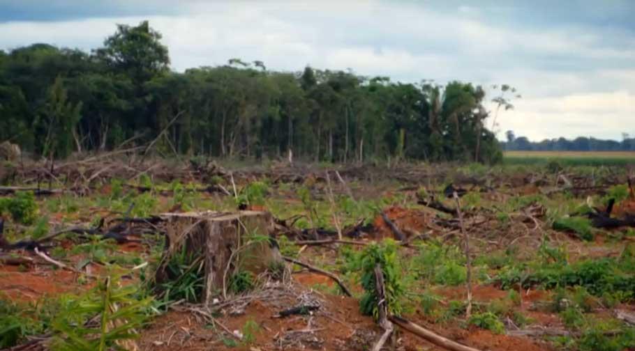 Amazon-rainforest-destruction- Deforestation threat worldwide