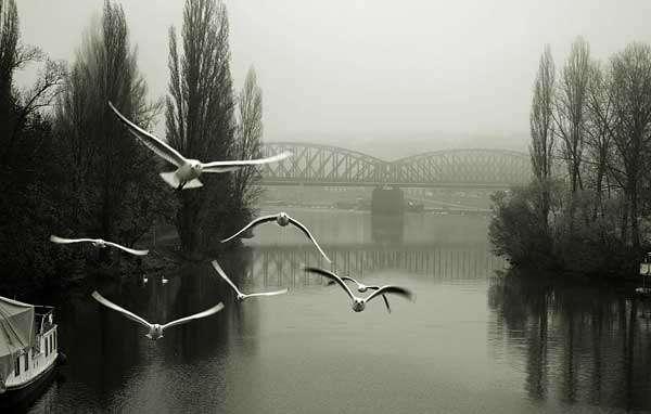 Photo-Of-Birds-Flying-from-Bangladeshi-Padma-Bridge