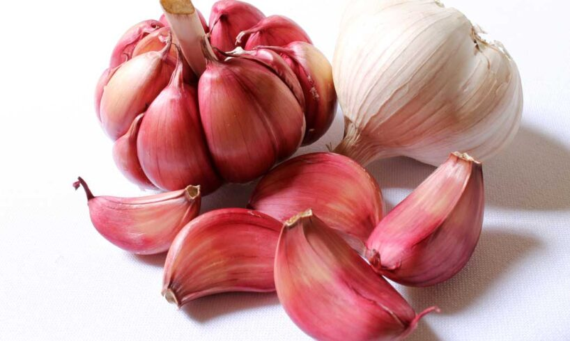 White-and-Purple-Garlic--health-benefits
