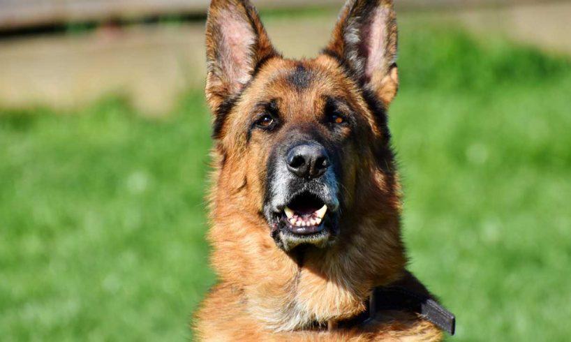 Biden-pet-dogs