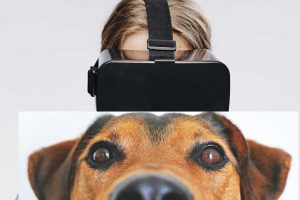 AR-glasses-dog