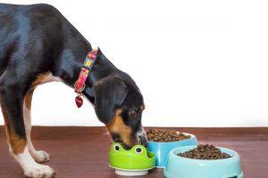 Dog-foods