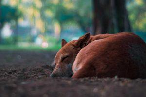 adopt-a-street-dog