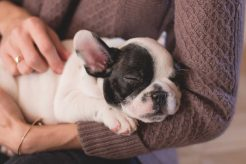 facts about Pet dog